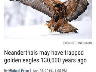 Did the cavemen practice falconry