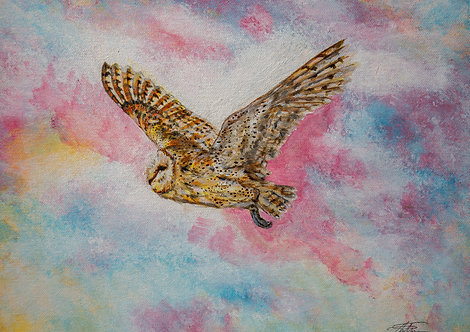 Barn Owl Floating Though Pink Sky's