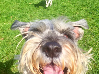 WagTail and WooF Doggy Day Care Info