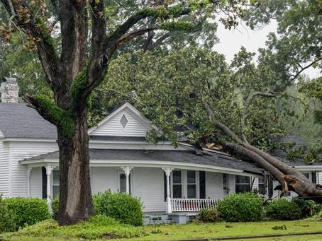 家里树倒了,房屋保险可理赔吗?