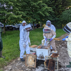 Chesterford Park Supporting Beekeepers For Life