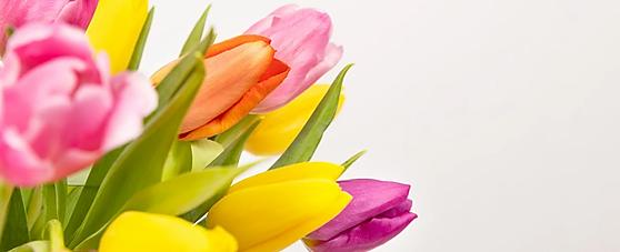 tulipanes.webp