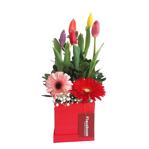 Box de 5 tulipanes, Gerberas y verdes selectos