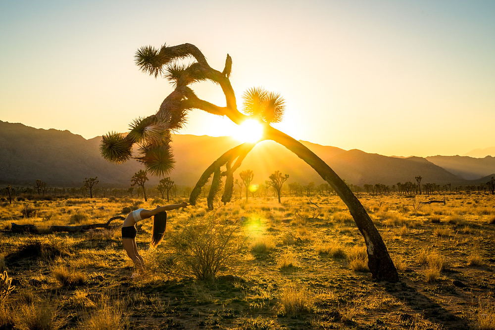 Springtime In JTree. Photo: Andy Best
