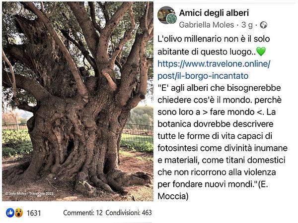 AMICI DEGLI ALBERI 2.jpg