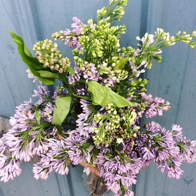 A few of our favourites this week_ from scented lilac and lavender, to our selection of potted items