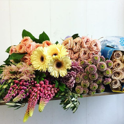 Local astilbe, lupine, football mums, gerbera, and doria mums with import favourites quicksand rose,