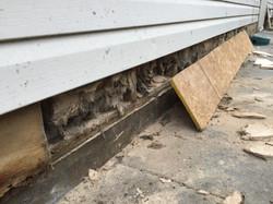 Pest Damage Repair