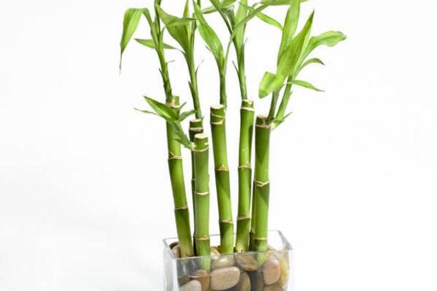 08-vaso-bambu-com-pedras.jpg