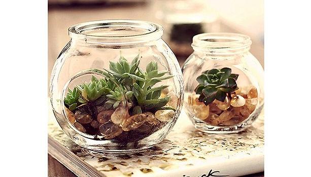 plantas-escritorio.jpg