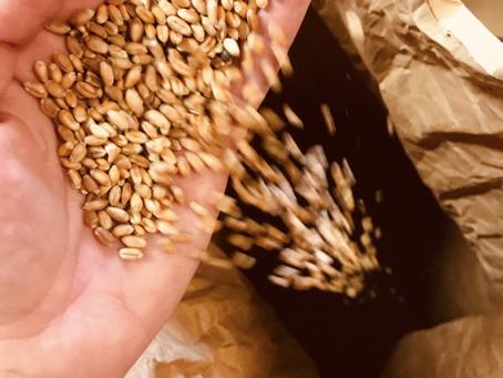 Formation moulin astrié : comment me former à la prise en main de mon moulin à meule de pierre ?