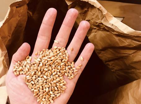 Production céréalière : valoriser votre production de blé