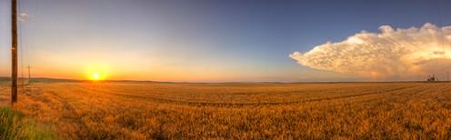 kansas-wheatfield.jpg