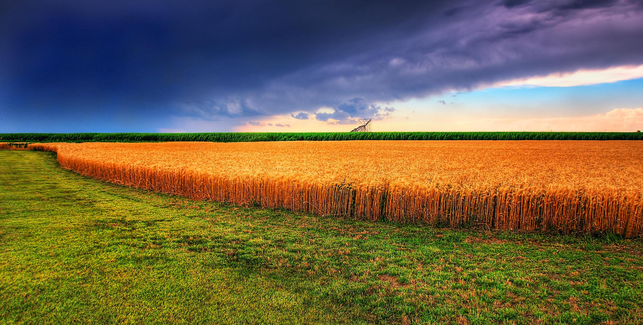 Kansas_Summer_Wheat_and_Storm_Panorama.jpg
