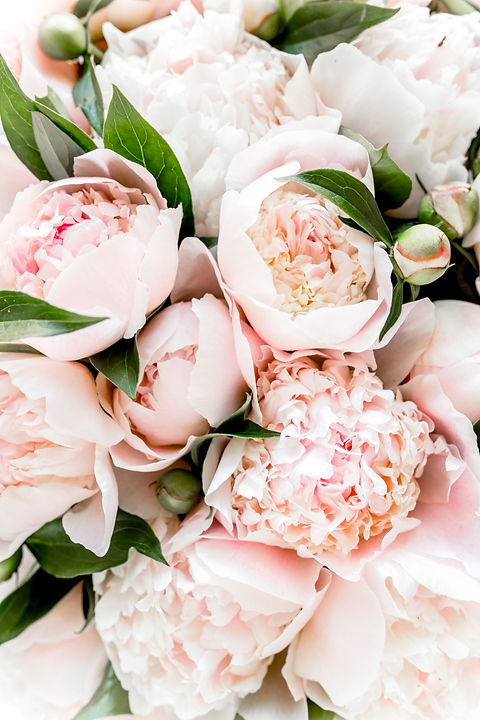 Bouquet of a lot of peonies of pink colo