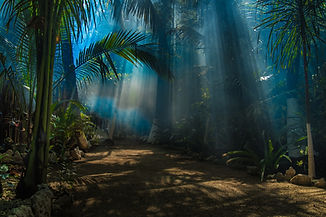 Morning light in a jungle garden.jpg