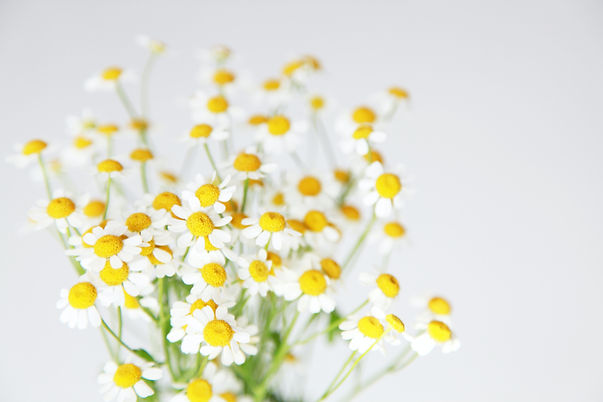 close-up-photo-of-white-flowers-3686922.