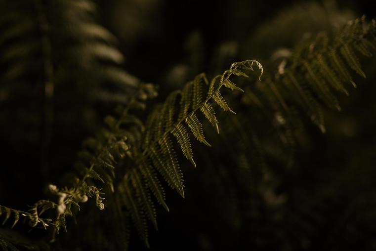 Cheryll_van_Weert_Photography_portfolio-