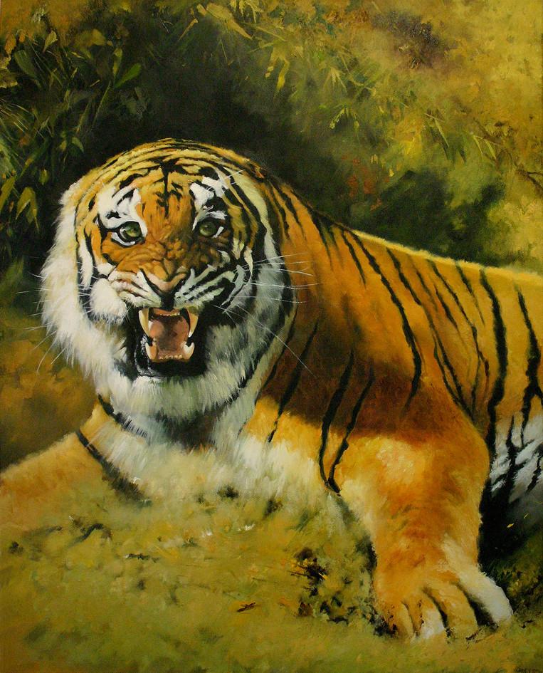 'Tiger Fire' - A study