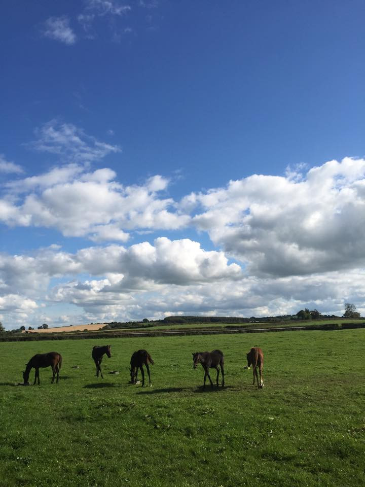 Blue Skies & Horses at Oak Lodge Ireland