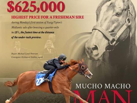 Mucho Macho Man Colt Lights Up Bid Board Late