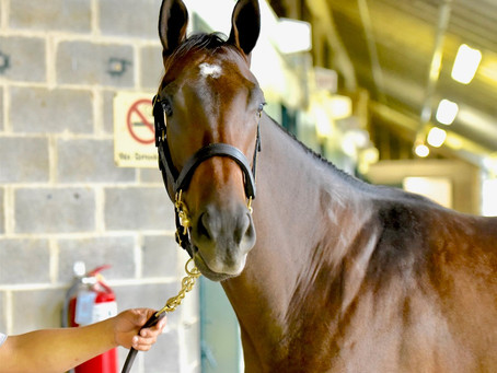 Mucho Macho Man Filly Tops Keeneland Session