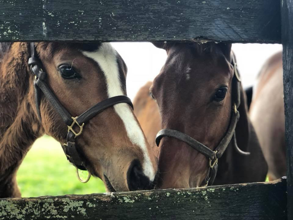Two Horses at Oak Lodge USA