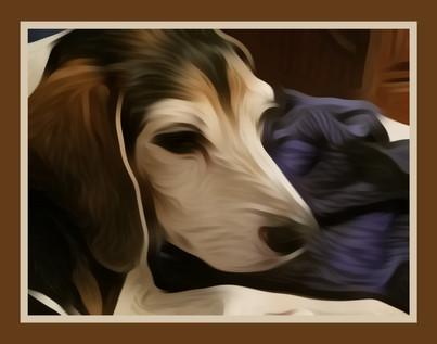 The Perfect Beagle Profile