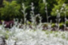 0053 White Flowers.jpg