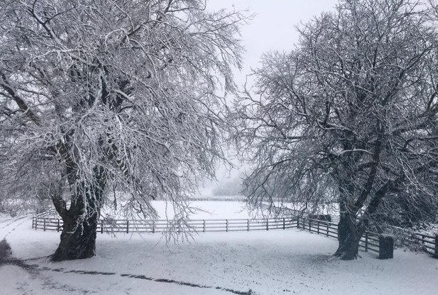 A Snowy Day at Springfield House Stud