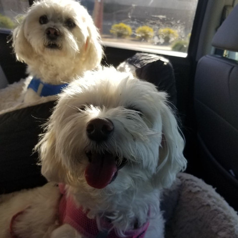 Bella and Bijou, Love Your Pets Too