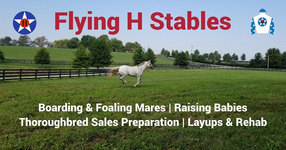 Flying H Stables Website