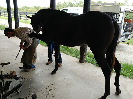 Farrier final prep on 300k Keeneland Sales