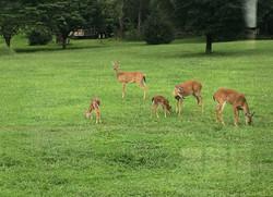 Deer Enjoying Our Farm