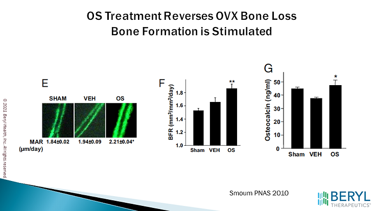 OS Treatment Reverses OVX Bone Loss.png