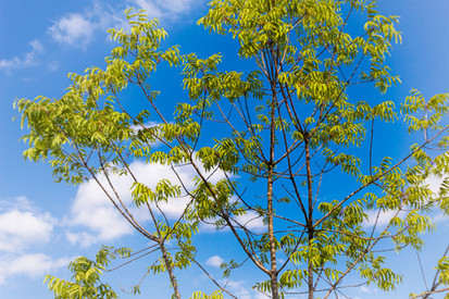 0085 Tree & Sky.jpg