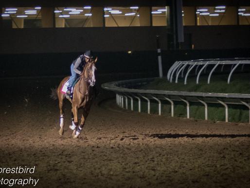 Georgia Horse Racing Coalition Names Kat Palma as Racing Reporter