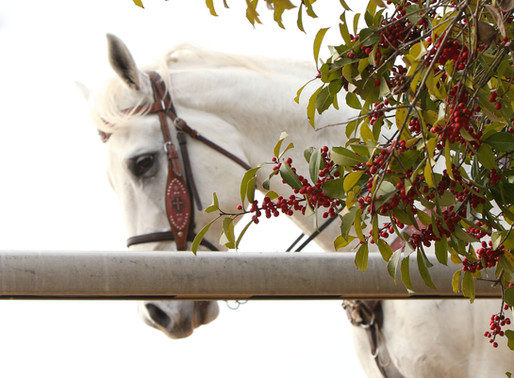The U.S. Humane Society forms national horse racing advisory council