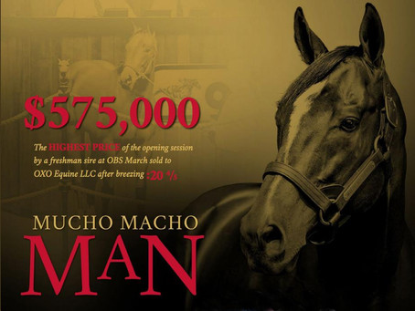 MUCHO MACHO MAN Colt Hammers Down for $575,000 at OBS March Sale