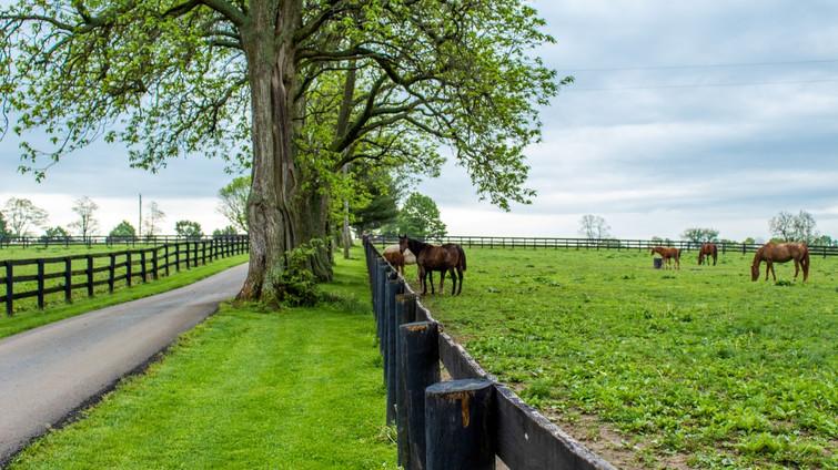 Horses Enjoying Spring at Oak Lodge USA