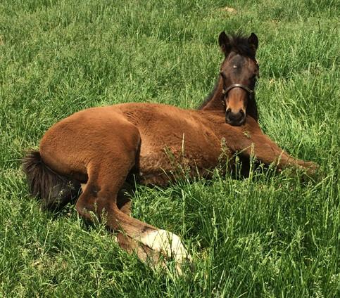 Foal in grass_edited.jpg