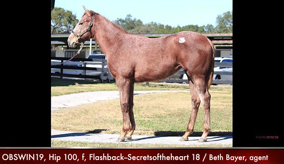 Hip 100 for Sale