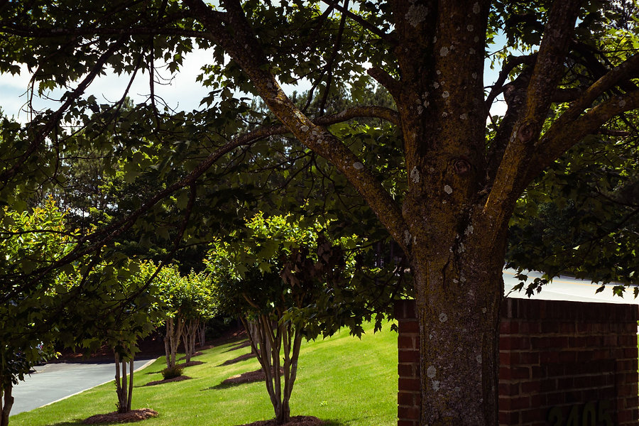 0046 Trees and sign.jpg