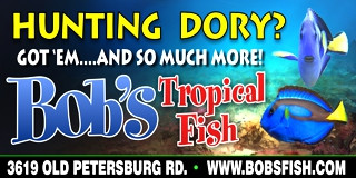 Bobs Tropical Fish 1.jpg
