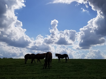 Horses & Clouds