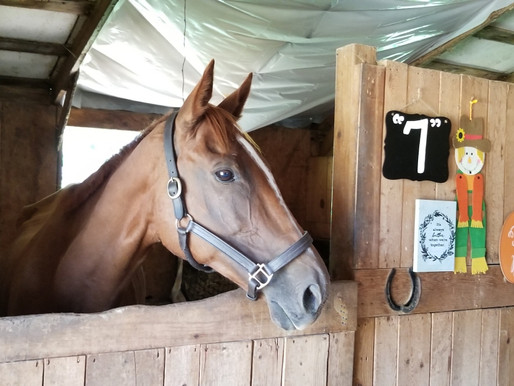 A New Home in Georgia for Zenyatta's Little Brother