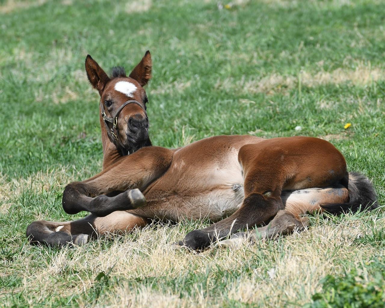 Foal Lying Down.jpg