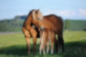mare and foal horse-1268801.jpg