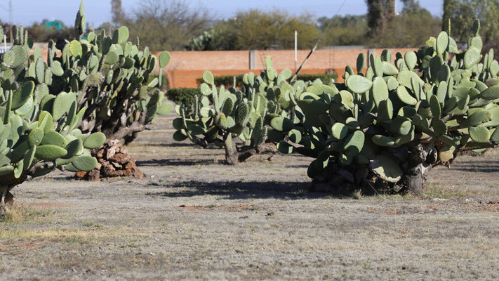 Clinic Photos Bethshean Mexico Mission (