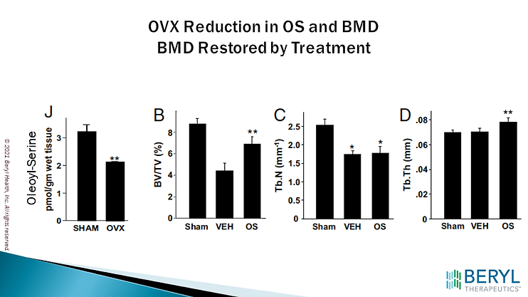 OVX Reduction in OS and BMD.png